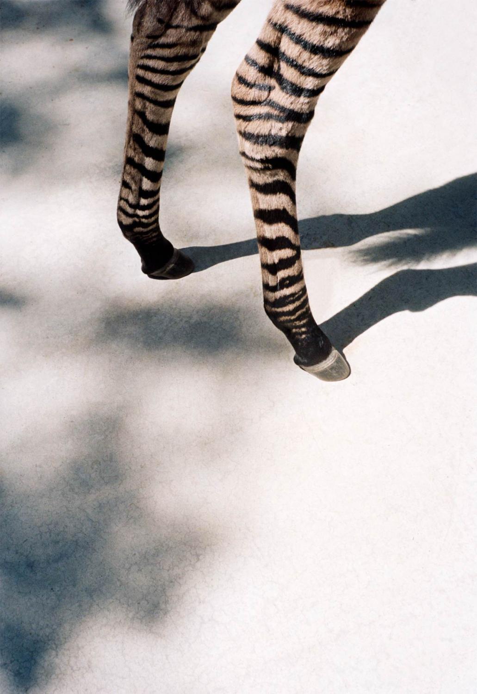 animal print, zebra print, fashion trend 2018